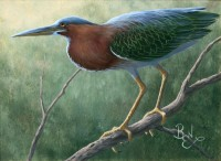 Bird Study - Green Heron