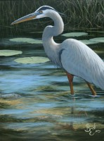 Water Study - Great Blue Heron
